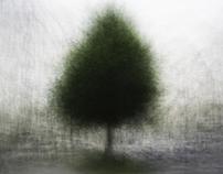 urban tree [ʊrˈba:n tri:]