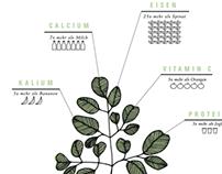 Moringa- The Essence Of Africa
