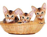 Kitties in a basket