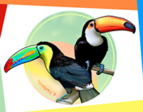 Toucan - Vector Drawings by K. Fairbanks