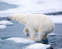 Arctic Life 2013
