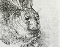 Hare, drawing