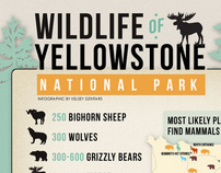Wildlife of Yellowstone Infographic