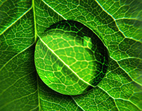 Chlorophyll iPhone Theme