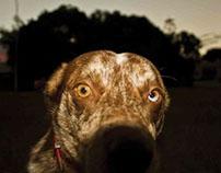Charlie the Wonder Dog - Site Subject Analysis