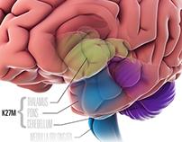 Mid Brain