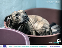 Staffordshire Bull Terrier Campaign Posters