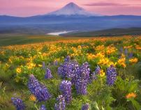 Dalles Mountain Wildflowers