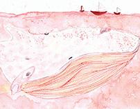 Cetaceus