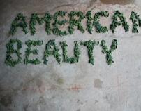 """American Beauty"""