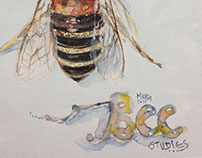 Anatomia das abelhas / The Anatomy of Bees