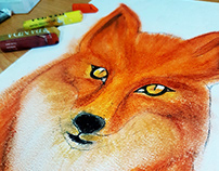 Foxy Boy