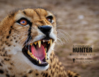 Cheetah - Wildlife Photography (Post Production)