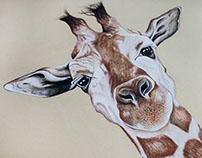Giraffe Charcoal