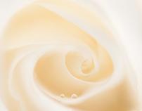 - 薔薇 -  Rose.