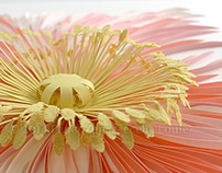 Quilling Pink Poppy