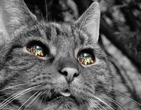 The World In A Cat's Eyes