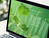 Quality Plant - Web Site