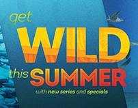 2014 WILD DVD Mailer
