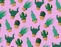 Smiling Cactuses