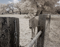 Infrared in Texas