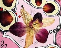 My Herbarium / Illustration