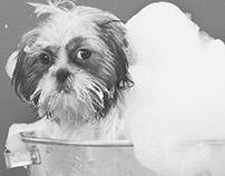 Pet Grooming Ad