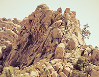 Photo - Joshua Tree National Park
