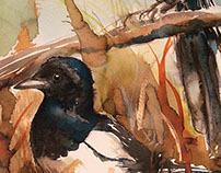 Bird illustrations - watercolor