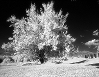 Infrared photography - test