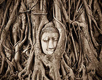 Buddha Head in Tree Roots, Wat Mahathat, Ayutthaya