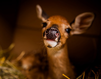 Personal: Molly the Fawn