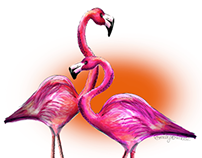 100th Blog - Flamingos