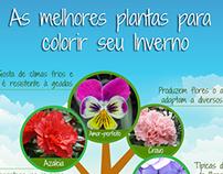 Infográfico Flores