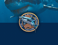 White Shark Dive Co. Responsive Website