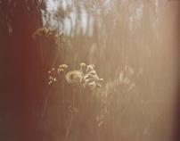 transient Summer