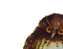 Endemic Birds In Sri Lanka