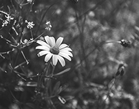 Monochrome floral photography