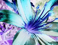 Flowers & brushes JB VI