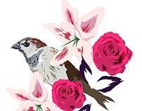spring sparrow illustration