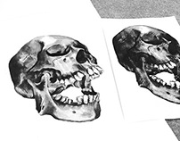 Skull Study Competition