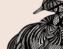 (Illustrations) Birds
