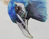 Peacocks ~ Fine Art