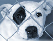 BC SPCA Web banners