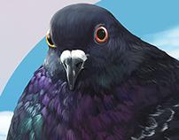 :: Gogó the pigeon ::