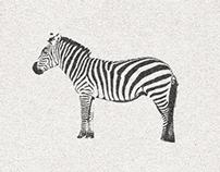 Scanning a Zebra