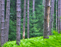 The Virtual Forest Initiative