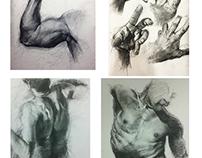 Human Form Studies