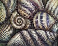 Caracoles y Conchas