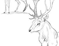Estudos e Sketches